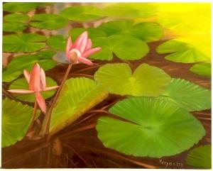 Lotus Pond-2