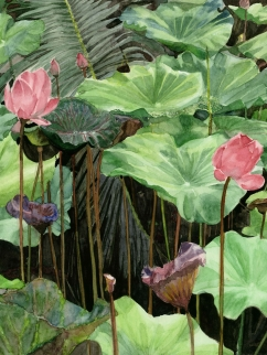 "This print is of a watercolour painting I did while living in Bangkok, Thailand. I became fascinated with lotus flowers while there, they're so beautiful and such an important part of Thai culture. While walking in Bangkok's largest park, Lumpini Park, I came across a small pond with a tangle of lotuses. I snapped a photo and then painted this in the studio of my artist friend and mentor, Russell Fadavi. I made several prints to give away to family and just came across my last remaining print. Let me know if you're interested in having this print adorn your wall! Print of Lotuses in Lumpini Park, Thailand 15.5"" x 12"" $60"